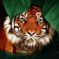 Jigsaw Puzzle - Tiger