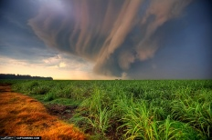 USA - Storm Cell over Sugarcane Fields, Florida